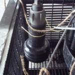 Test plug in basket